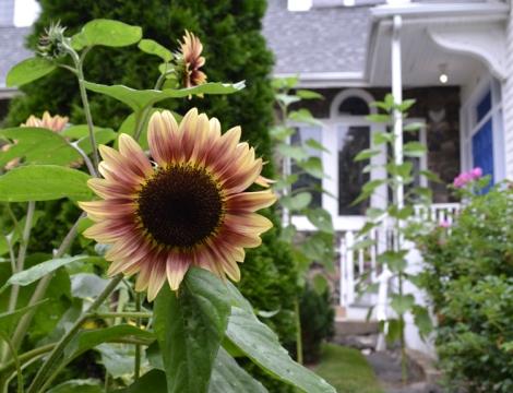 GardenSunFlower_feature_750w