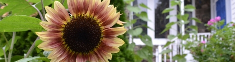GardenSunFlower_skinny_banner_1500w