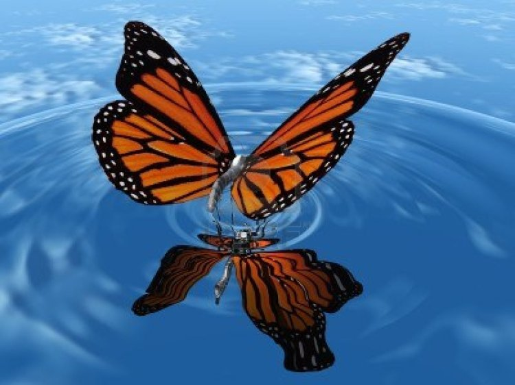 butterfly-wallpaper-5